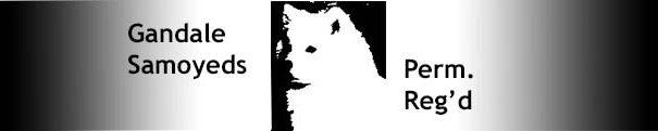 Gandale Samoyeds Perm. Reg'd